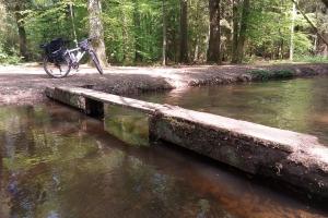 Im Wald neben Meissendorfer Teich.