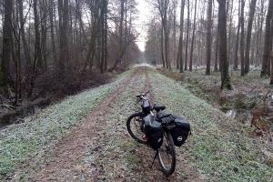 Es ist kalt, aber trotzdem schönt im Wald.