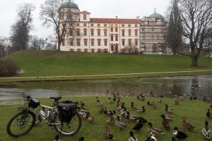 Die Enten haben aber Interesse an meinem Fahrrad.