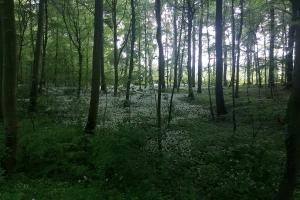 Weißer Tepich im Wald.