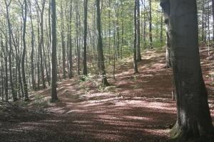 Der scöne Wald auf dem Süntel.