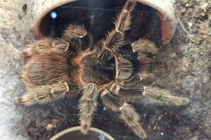 Hitzentour - Tag 3 - Mit Vogelspinnen - Noch eine riesige Spinne.