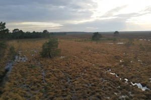Nordturm Bissendorfer Moor