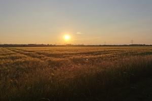 Das Dreieck - Sonnenuntergang in der Nähe von Stolzenau.