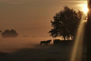 Nebel und Pferde
