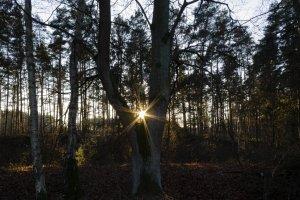 Sonnigtour - Sonne auf - Sonne unter - die Sonne im Wald