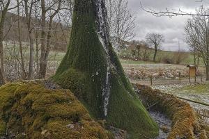 Auf Ith und 20 000 km - Wasserbaum